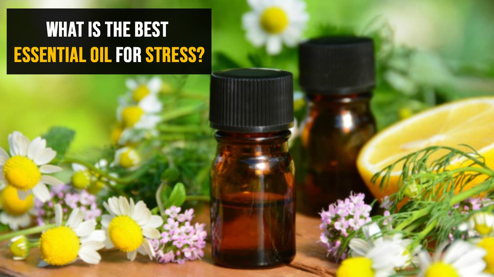 Photo of Aromatherapy & Vital Oils for Relaxation and Stress Release