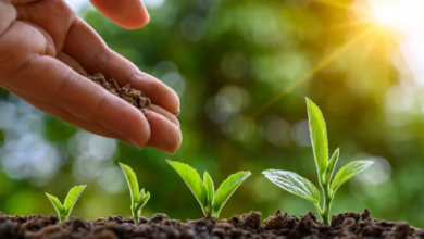 Photo of 9 Overwhelming Benefits of Planting A Tree