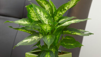 Photo of 8 Cool Plants That Make Excellent Gift Ideas for Loved Ones