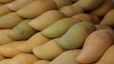 Photo of How many types of Mangoes Pakistan Export?