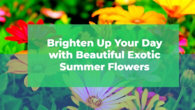 Photo of Brightening Up Your Summers Through Flowers