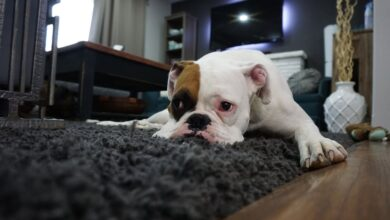 Photo of Health Hazard: Understanding the Dangers of Dirty Carpets
