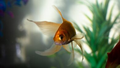 Photo of Everything Pet Owners Should Consider When Buying Fish