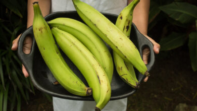 Photo of 5 Interesting Reasons to Incorporate Plantain Starch Into Your Cooking