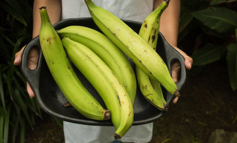 plantain starch