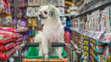 Photo of 5 Rewarding Benefits of Doggy Daycare