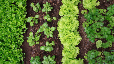 Photo of Tips TO Grow The Perfect Vegetable Garden