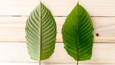 Photo of Everything You Should Know About Kratom Maeng Da Capsules